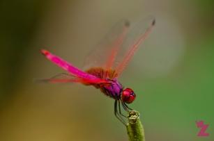 Exploring the Malaysian Jungle: Endau-Rompin National Park: https://zoomologyblog.wordpress.com/2017/05/20/exploring-the-malaysian-jungle-endau-rompin-national-park/