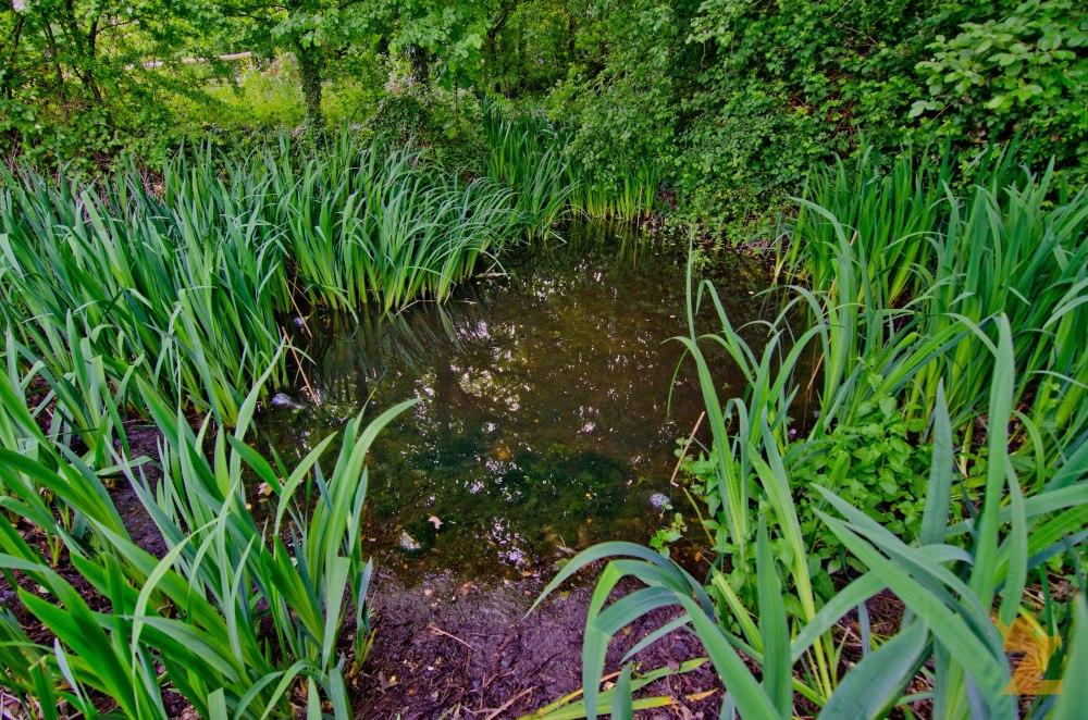 GCN Pond