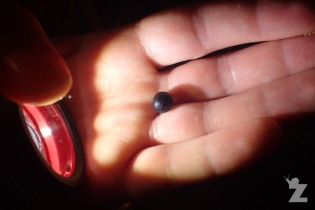 A pill millepede