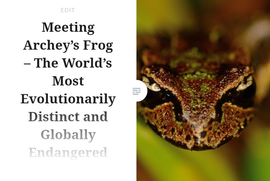 Archeys Frog