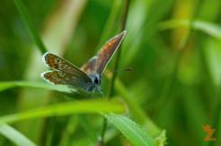 Gotta Count 'em All – Butterfly Bonanza: https://zoomologyblog.wordpress.com/2017/06/29/gotta-count-em-all-butterfly-bonanza/