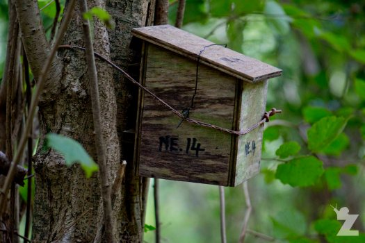 Dormouse Box England 2017-09-09
