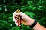 "The Hazel Dormouse AKA ""The Sleepy One"": https://zoomologyblog.wordpress.com/2017/09/29/the-hazel-dormouse-aka-the-sleepy-one/"