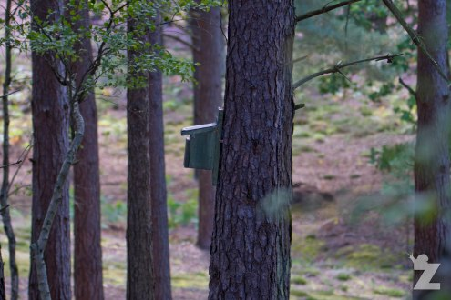 Nest box attached to a tree