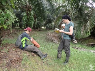 Recording the location and associated data after tracking down a civet