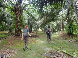 Max and Tom walking through the oil palm plantation