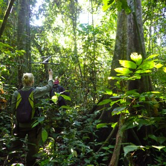 Emma tracking the first slow loris