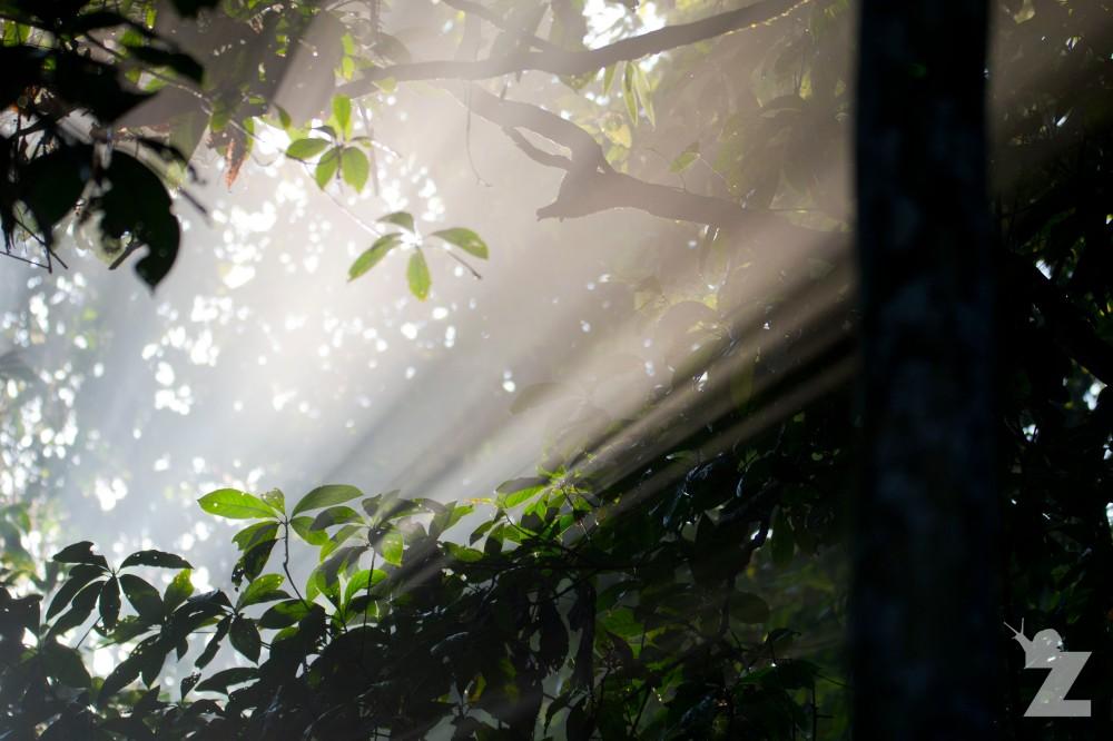 Morning Break in the Rainforest