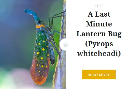 Zoomology Lantern Bug