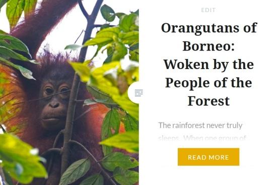 Zoomology Orangutan
