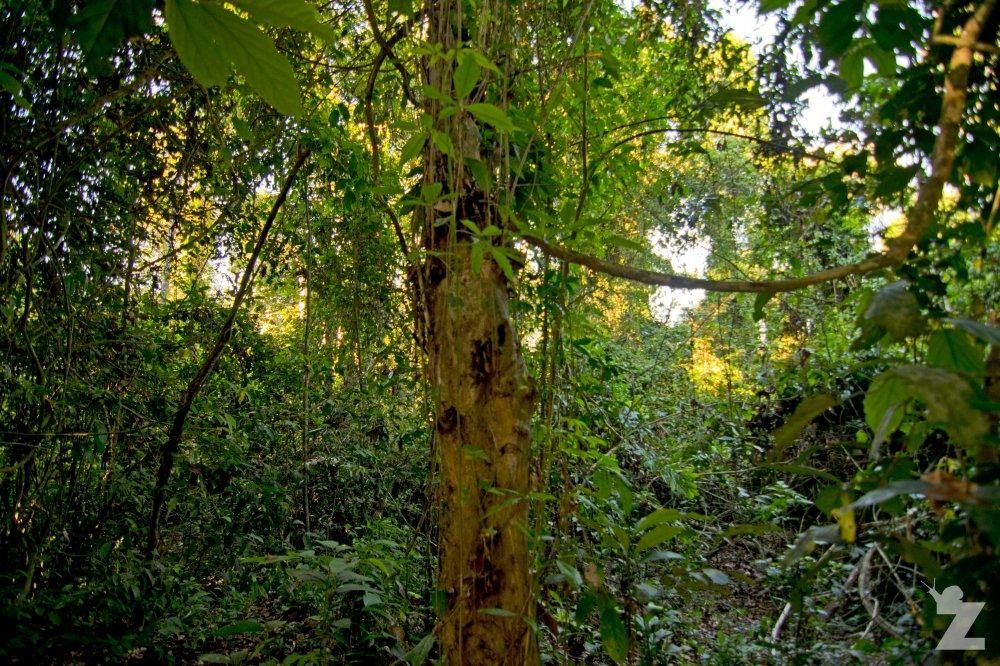 Tarantula Tree (2)