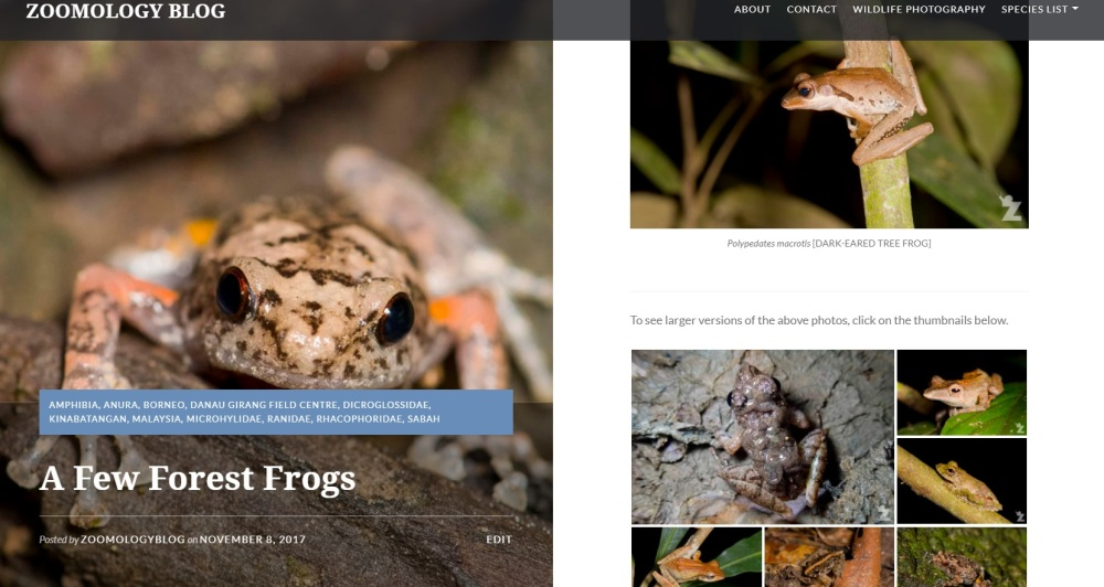 Zoomology Forest Frogs