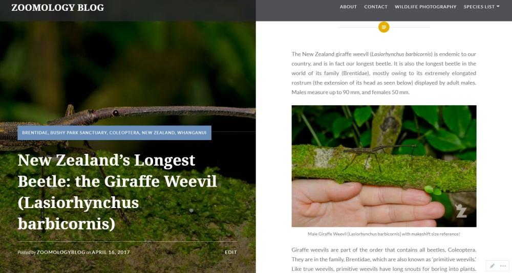 Zoomology Giraffe Weevil