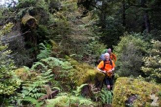 Chainsawed Passage Through a Fallen Tree copy, Kaweka Forest Park, New Zealand 20-01-2018