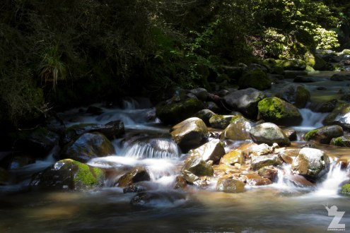 Forest Streams (3), Kaweka Forest Park, New Zealand 20-01-2018