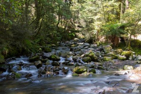 Forest Streams (4), Kaweka Forest Park, New Zealand 20-01-2018