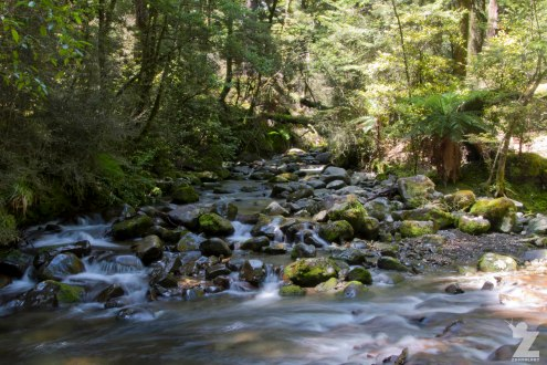 Forest Streams (4), Kaweka Forest Park, New Zealand 20-01-2018