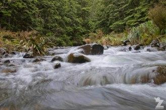 Forest Streams, Kaweka Forest Park, New Zealand 20-01-2018