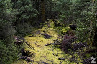 Moss Covered Clearings, Kaweka Forest Park, New Zealand 20-01-2018