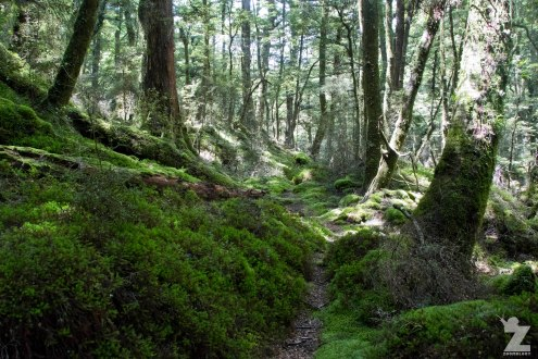 Moss-lined Paths Through the Beech Forest (3), Kaweka and Kaimanawa Forest Park, New Zealand 20-01-2018