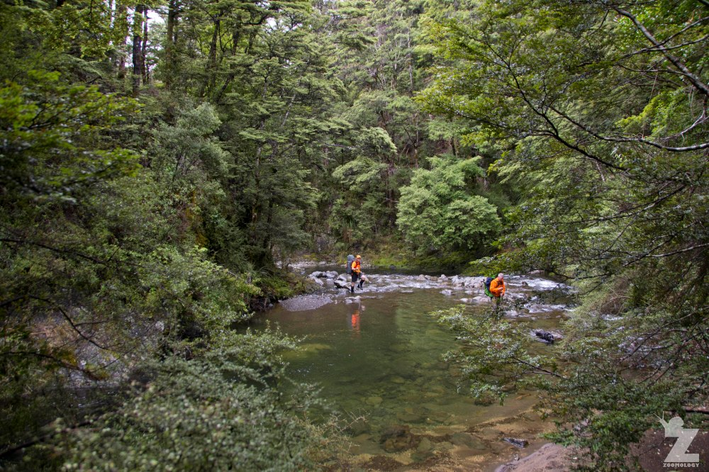 River Crossings, Kaweka and Kaimanawa Forest Park, New Zealand 20-01-2018