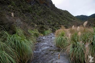 Stream, Kaweka and Kaimanawa Forest Park, New Zealand 20-01-2018