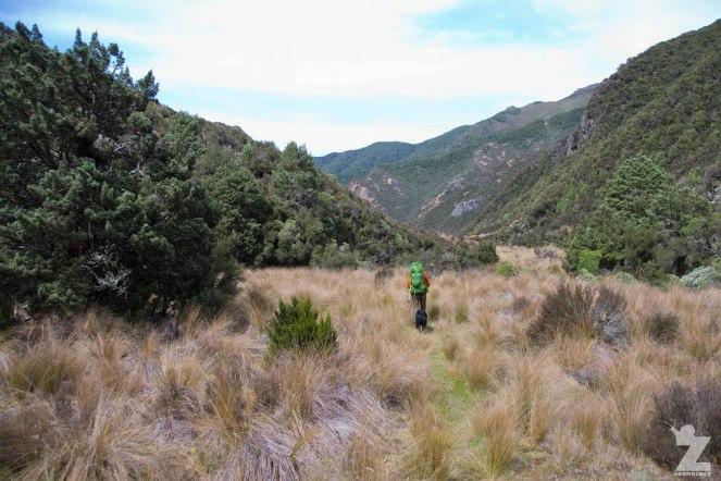 Tussock Valleys, Kaweka and Kaimanawa Forest Park, New Zealand 20-01-2018