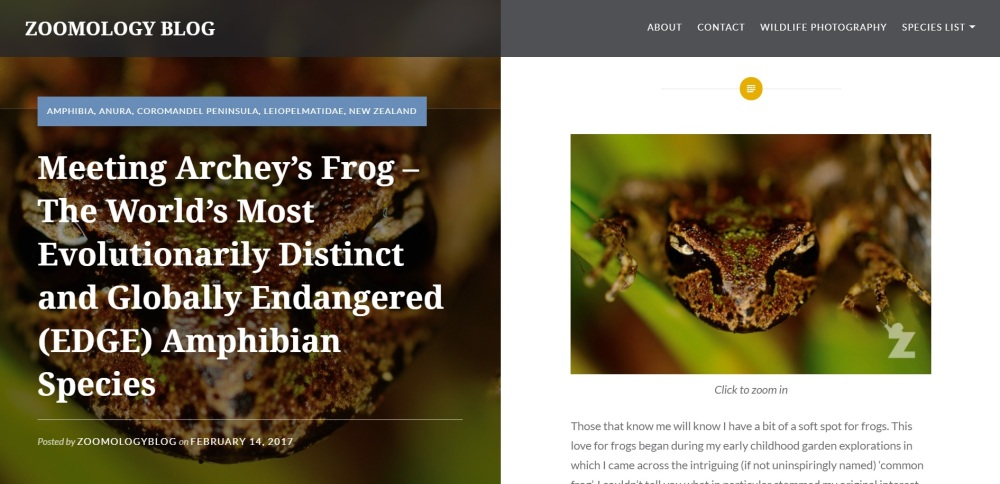 Zoomology Archey's Frog