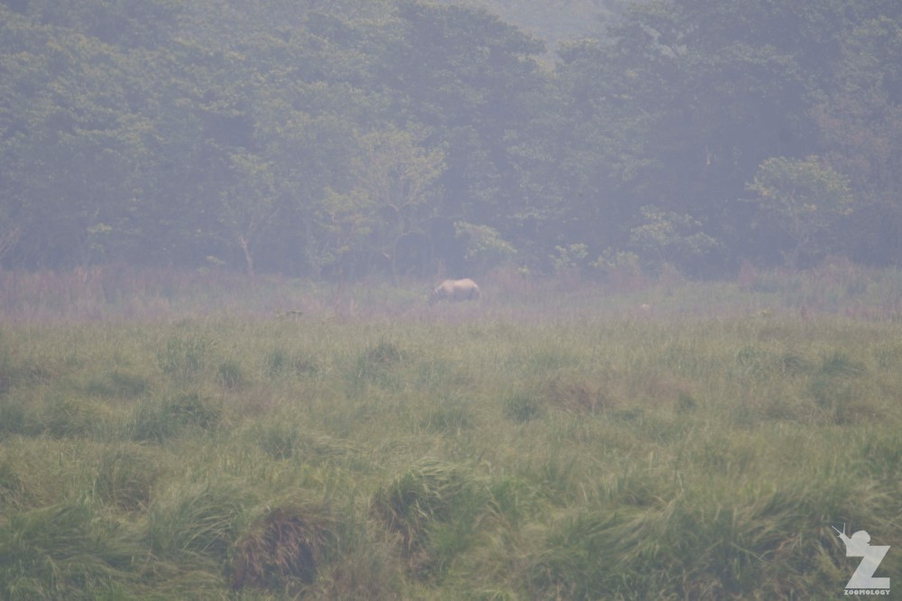 Rhinoceros unicornis [GREATER ONE-HORNED RHINO] Nepal, Chitwan National Park 22-4-2018 Zoomology (5)
