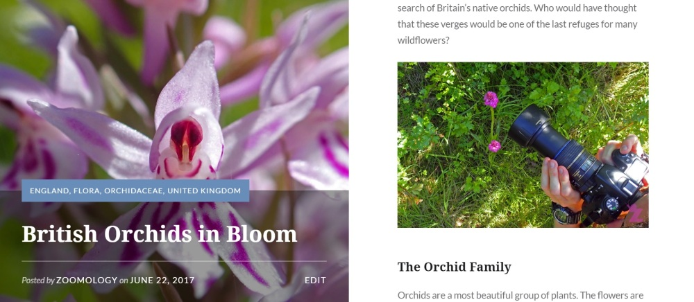 Zoomology - British Orchids in Bloom